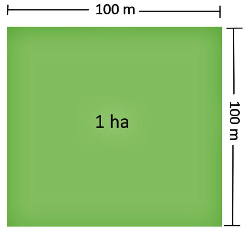 Hình vuông quy đổi 1 ha bằng bao nhiêu m2